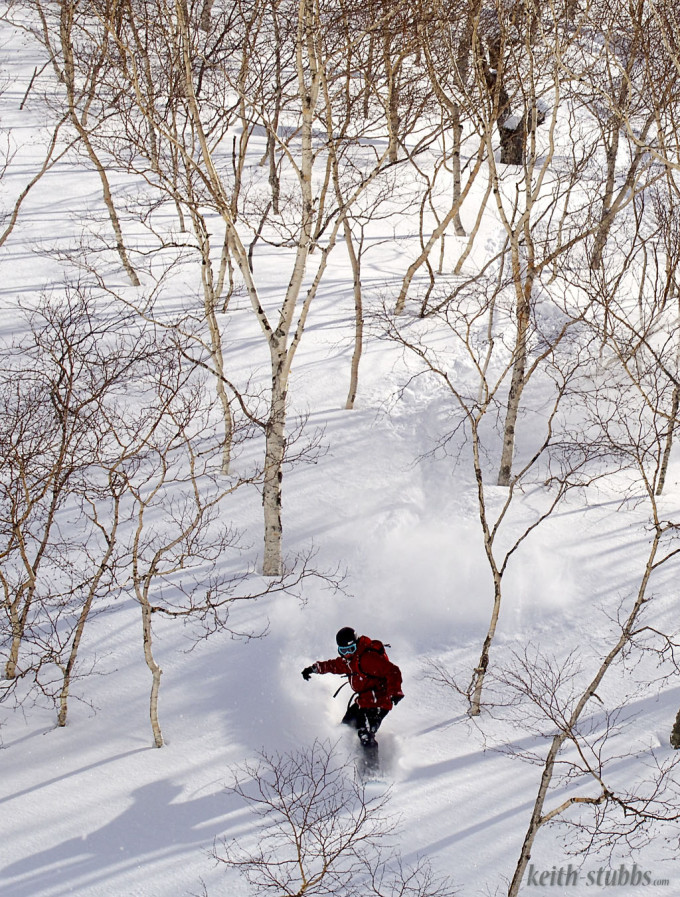 Paul Philip riding trees in Niseko