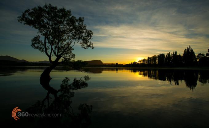 Famous Wanaka tree at sunrise
