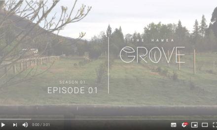 Welcome to The Hawea Grove